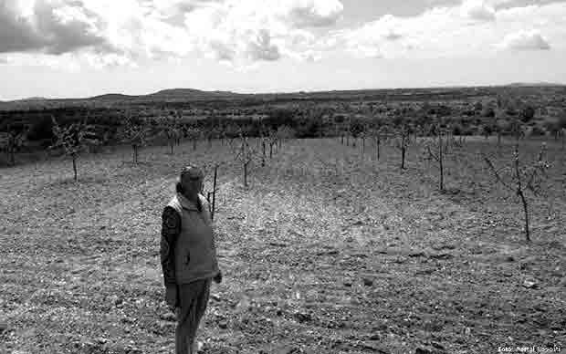 Biljane Gornje: Mira Gagić u uništenom polju badema Foto: Portal Novosti, Paulina Arbutina