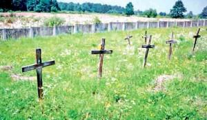 Kostajnica, Šaš: Groblje na kome su sahranjeni stradali Srbi Foto: DIC Veritas, Politika